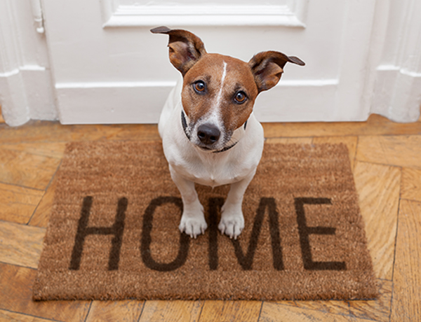 Ideal Flooring Options For Pet Owners